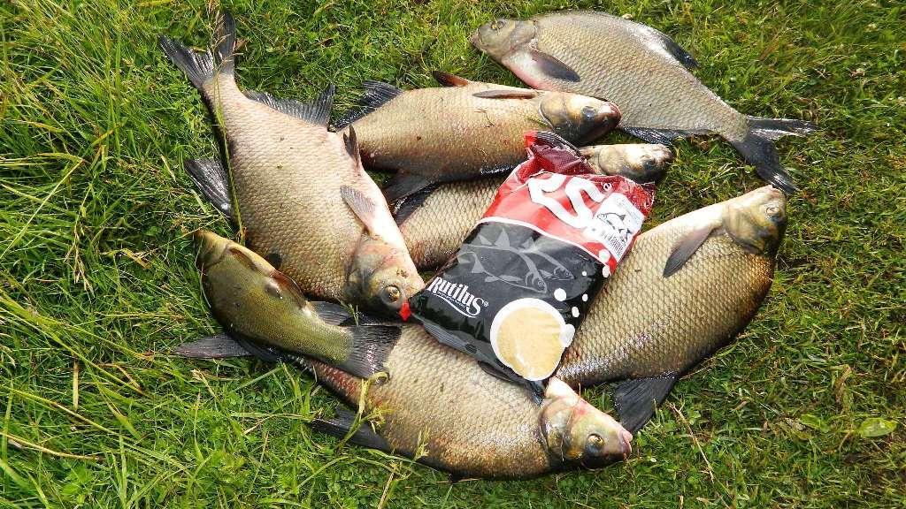 прогноз на клев рыбы в кимрах